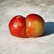 fresh apples with interesting deformations in beautiful light give phantasy a hint