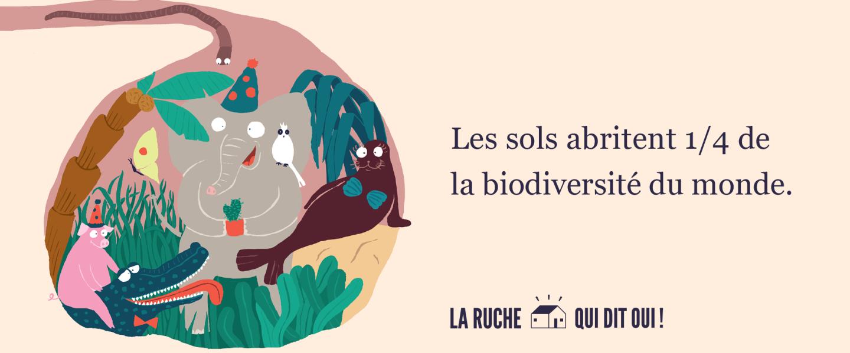 Les sols abritent 1/4 de la biodiversité du monde.