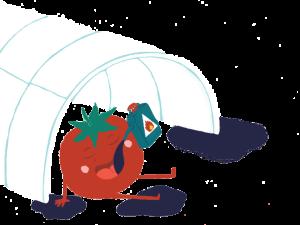 La culture de tomates sous serre consomme 10 fois plus de pétrole que la culture de tomates en plein champ.
