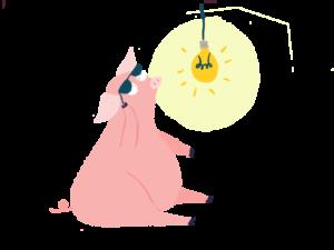 Pig_704x528