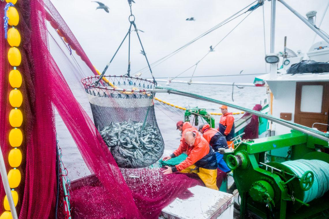 La bolinche, c'est le filet rose. La salabarde, c'est le filet plein de sardine au premier plan. © Thomas Louapre