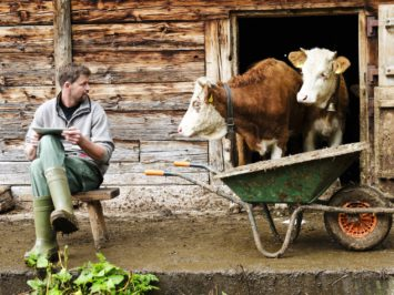 Swiss farmer next to cattle with digital tablet