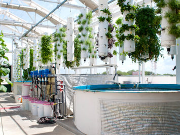 pentair_story_aquaponics_inline_greensky