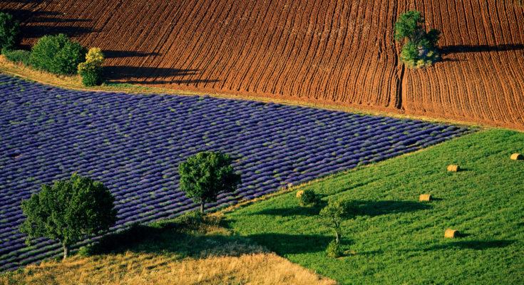 """Paysage de champs colorés près de Sarraud, Vaucluse, France (44°01' N – 5°24' E). """"La solution est dans l'assiette"""" - Fondation GoodPlanet - © Yann Arhus-Bertrand"""