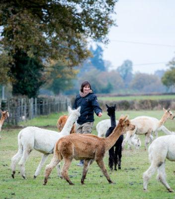 Lamas du Tilloux