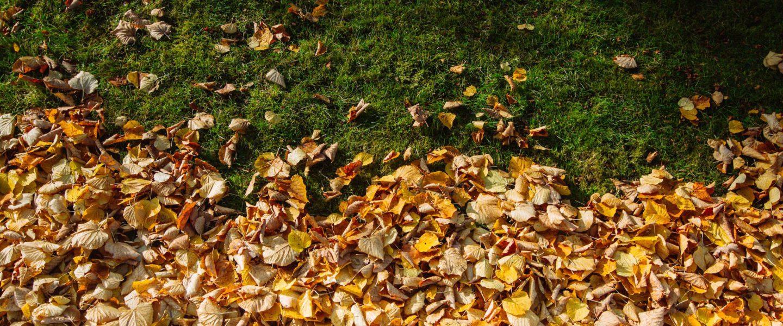 ramasser feuilles mortes avec tondeuse tapis de feuilles with ramasser feuilles mortes avec. Black Bedroom Furniture Sets. Home Design Ideas