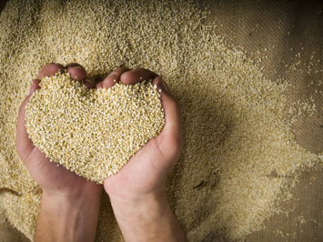 Heart shaped Superfood organic Quinoa whole grain in hands