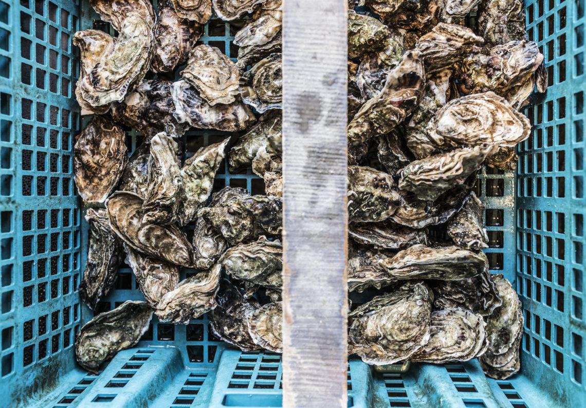 Autrefois, on surnommait l'huître «rince gueule». Associée au champagne, elle aurait en effet le pouvoir de remettre les estomacs les plus détraqués en place. ©Olivier Cochard