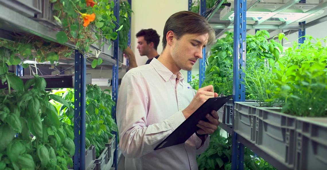 L'hydroponie en est à ses débuts en France. Il s'agit pourtant d' une technique horticole très ancienne qui permet de cultiver hors-sol.