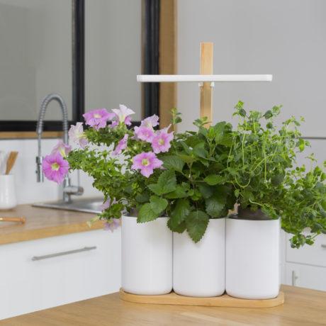 comment j ai cultiv mon jardin int rieur oui le magazine de la ruche qui dit oui. Black Bedroom Furniture Sets. Home Design Ideas