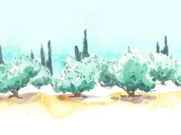 Une grande allée bordée d'oliviers