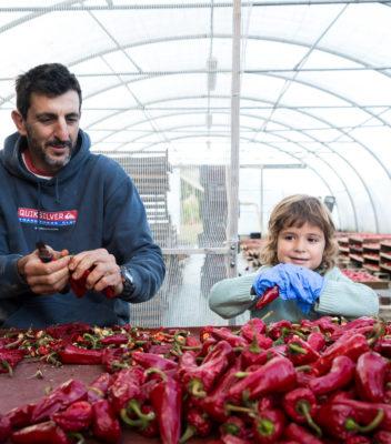 Didier Testemale, producteur de piments d'Espelette