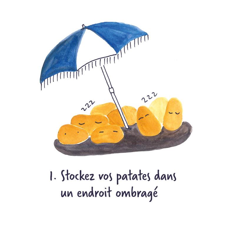 patates sans germe