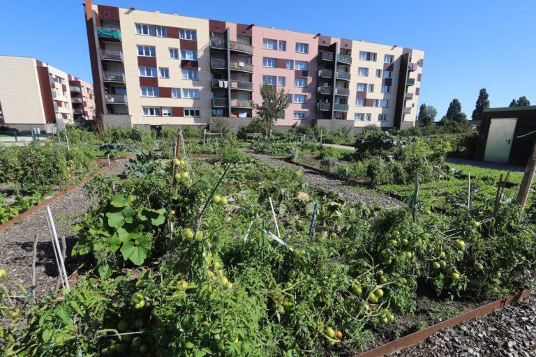 Jardin partagé, ville de Grande-Synthe